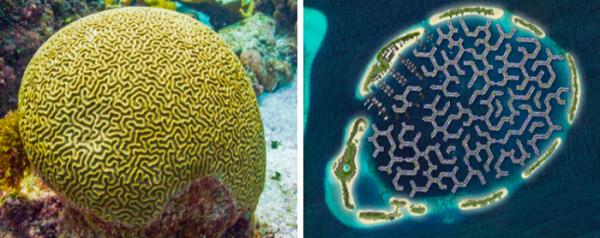 نخستین شهر شناور جهان در مالدیو