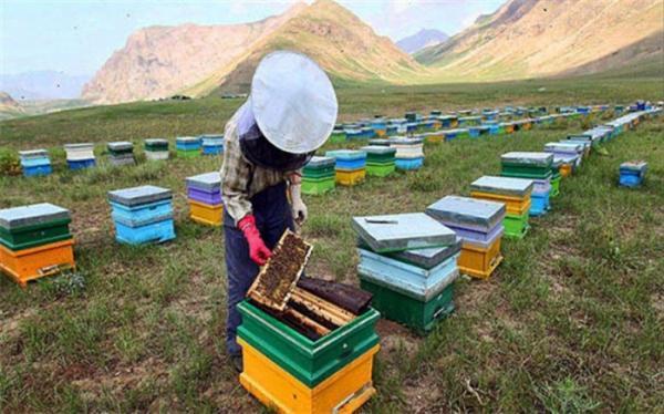زنبورداران همچون عشایر از اخذ کد شناسه یکتا مستثنی می شوند